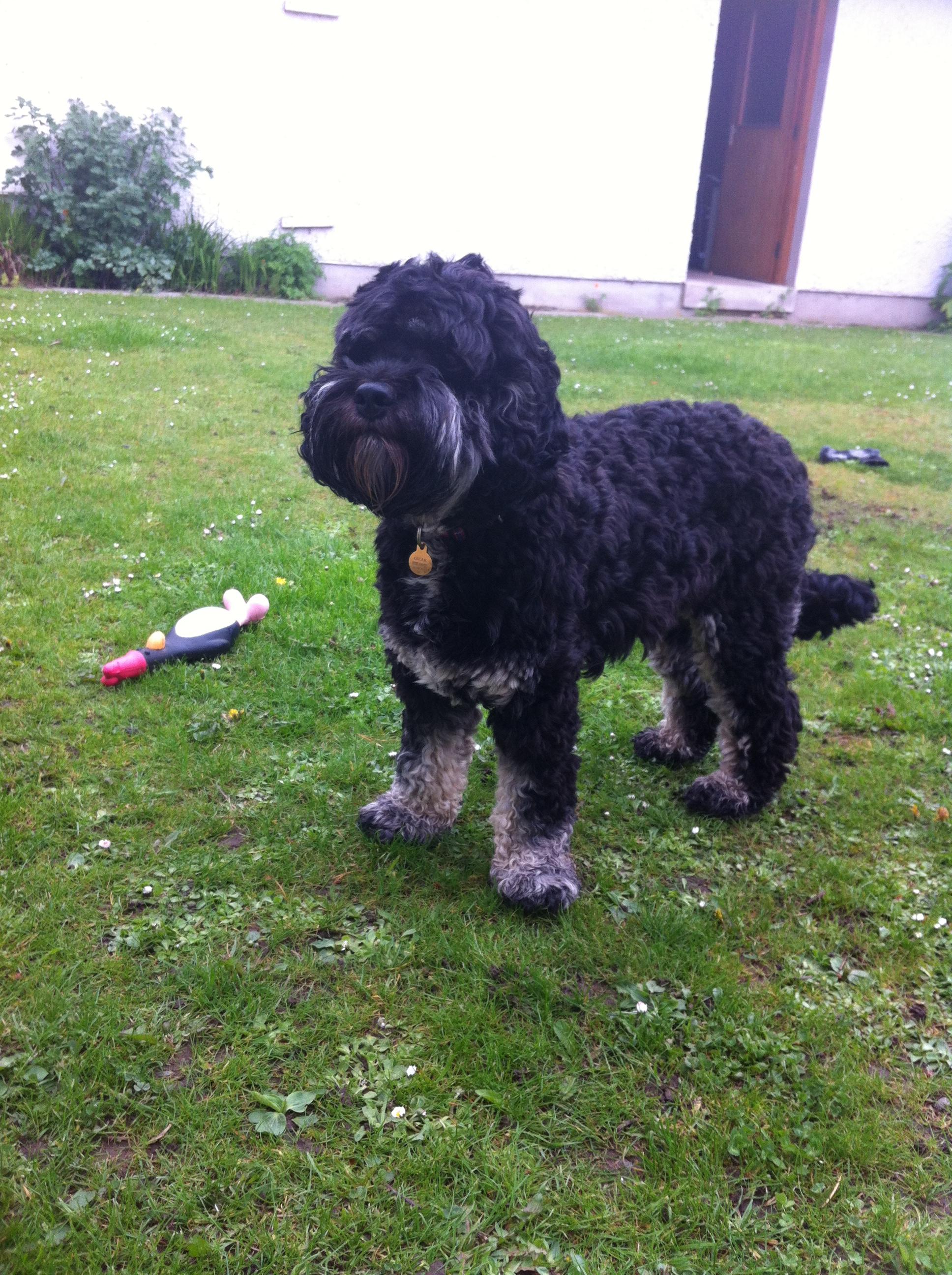 Oscar, the Deeside Dog