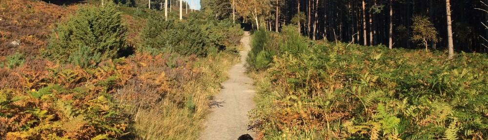 Cambus O May Forest Walk